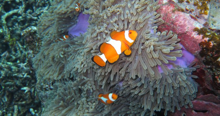 Nemo bigger