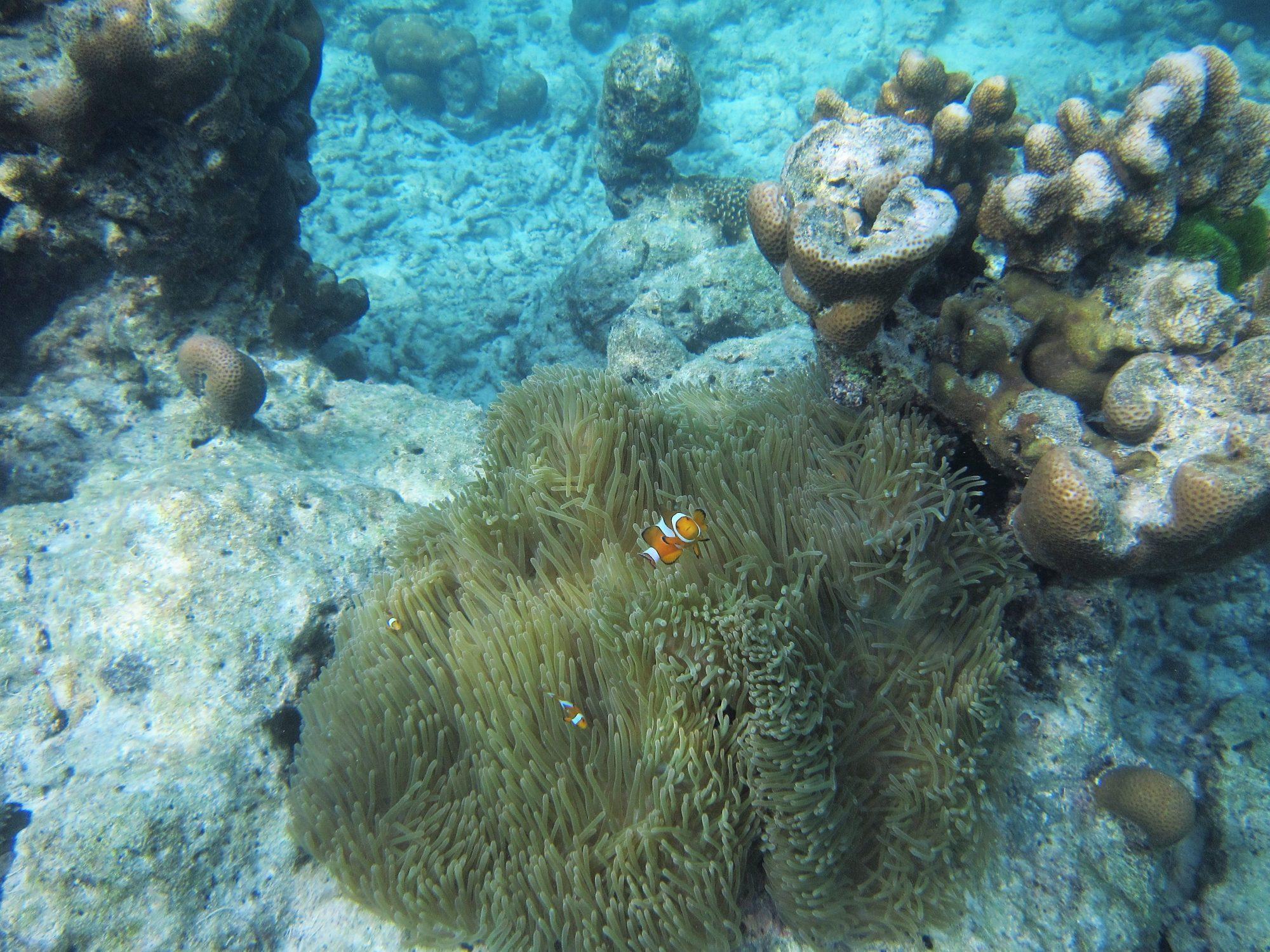 Nemo coming closer
